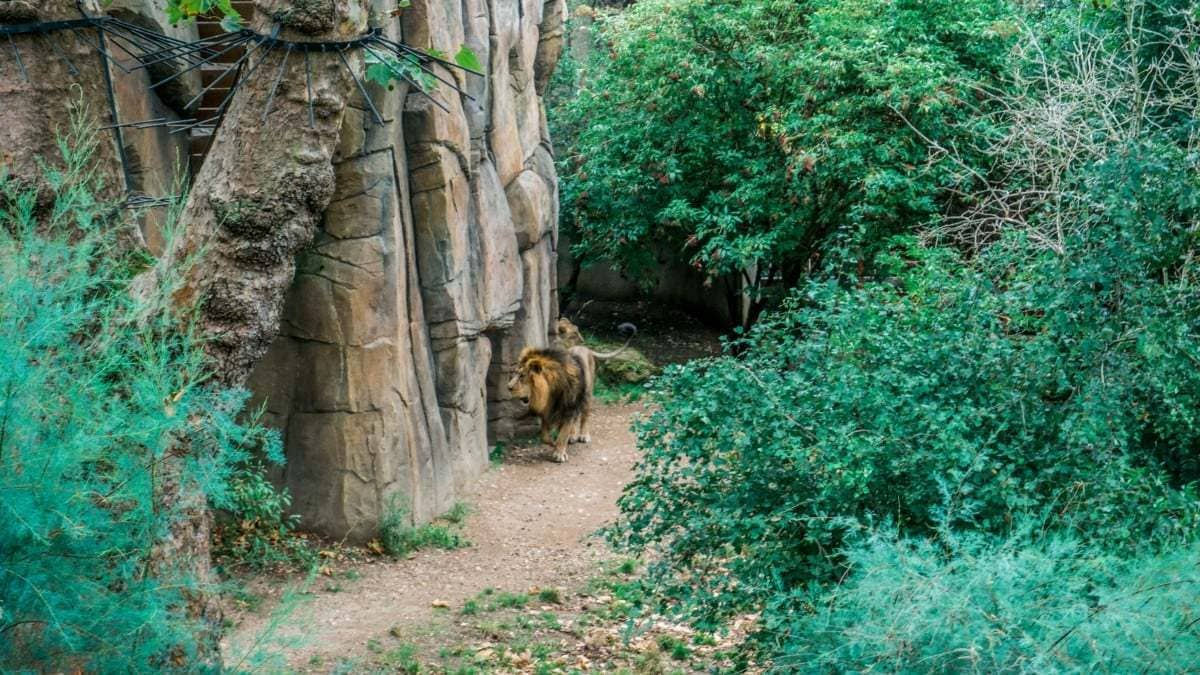 10-reasons-to-visit-London-Zoo