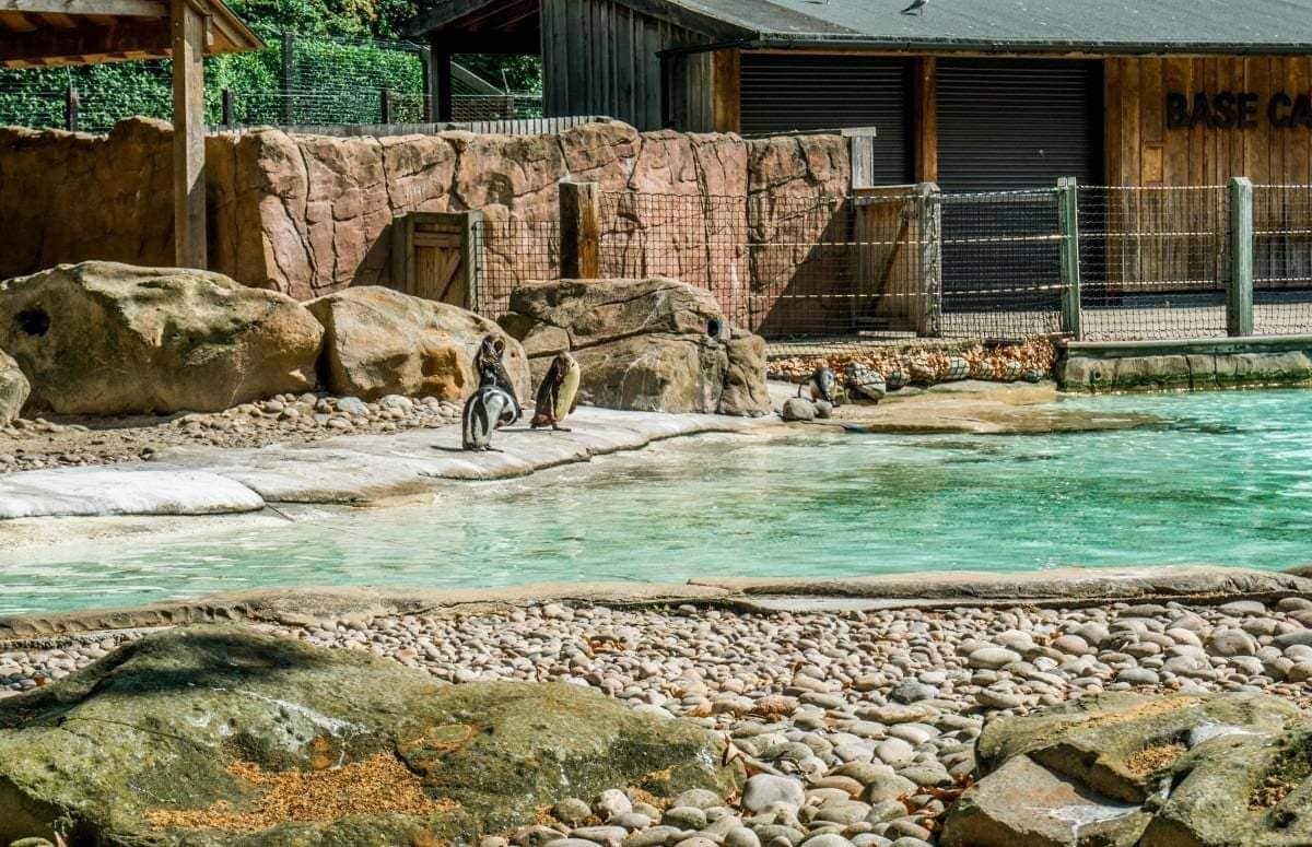 10 reasons to visit London Zoo