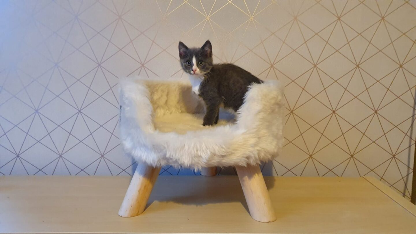 Nordic cat bed the pet superstore