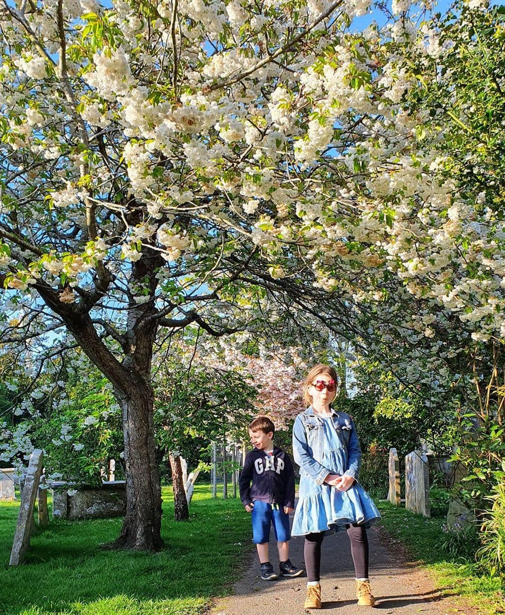 kids in the blossom trees